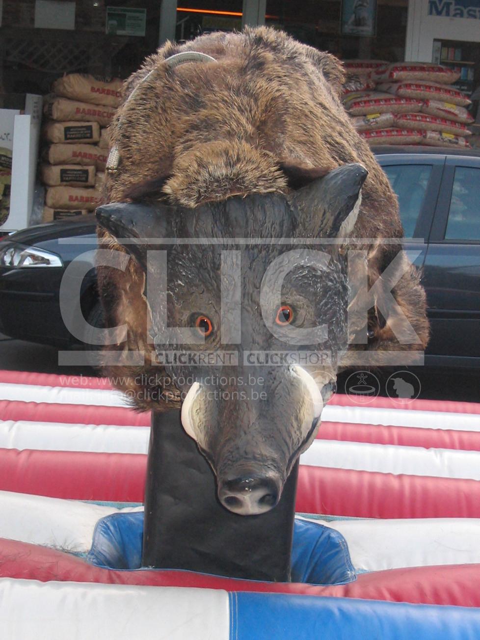Rodeo Everzwijn Te Huur